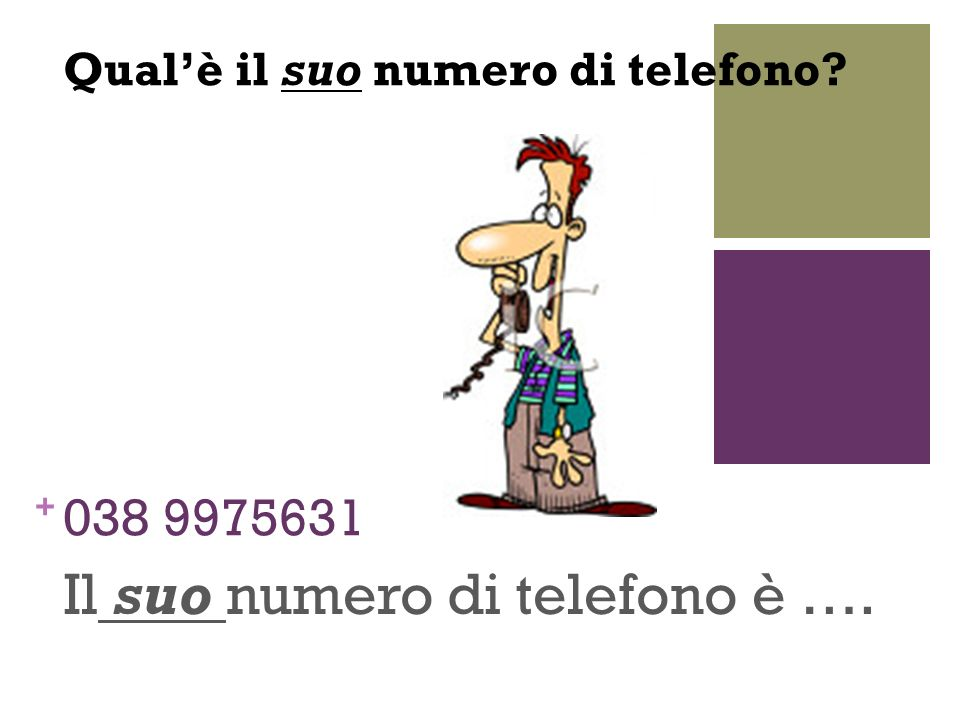 Il suo numero di telefono è ….