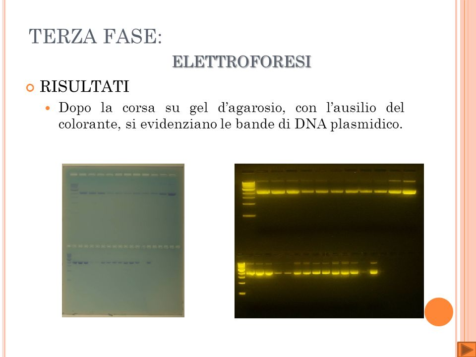 TERZA FASE: elettroforesi