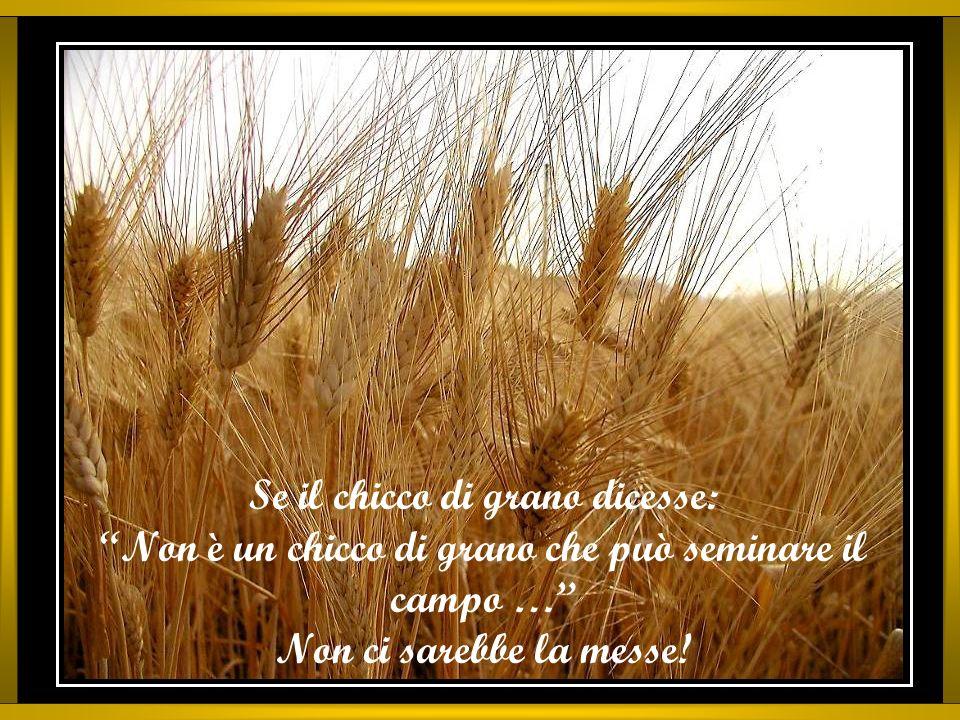 Se il chicco di grano dicesse: Non è un chicco di grano che può seminare il campo … Non ci sarebbe la messe!