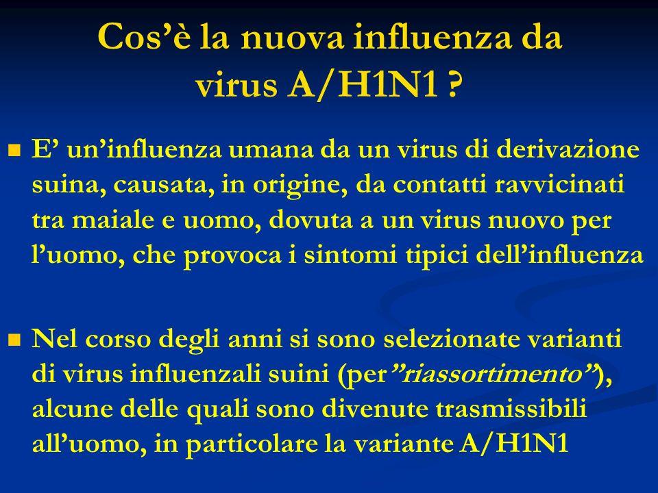 Cos'è la nuova influenza da virus A/H1N1