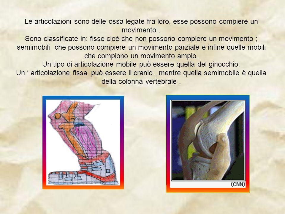 Un tipo di articolazione mobile può essere quella del ginocchio.
