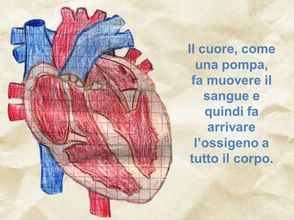 Il cuore, come una pompa, fa muovere il sangue e quindi fa arrivare l'ossigeno a tutto il corpo.