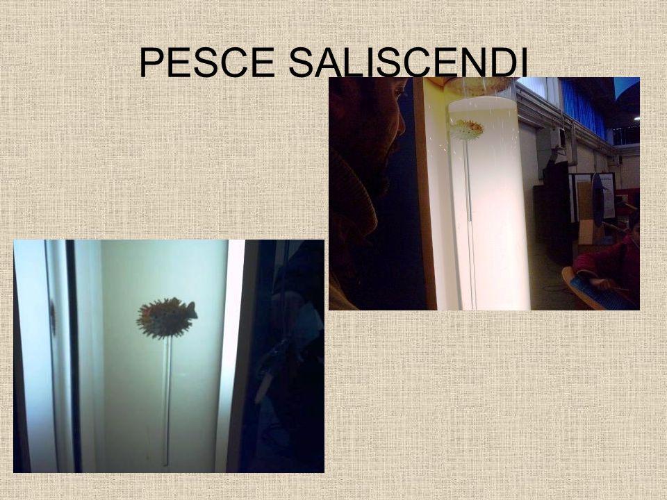 PESCE SALISCENDI