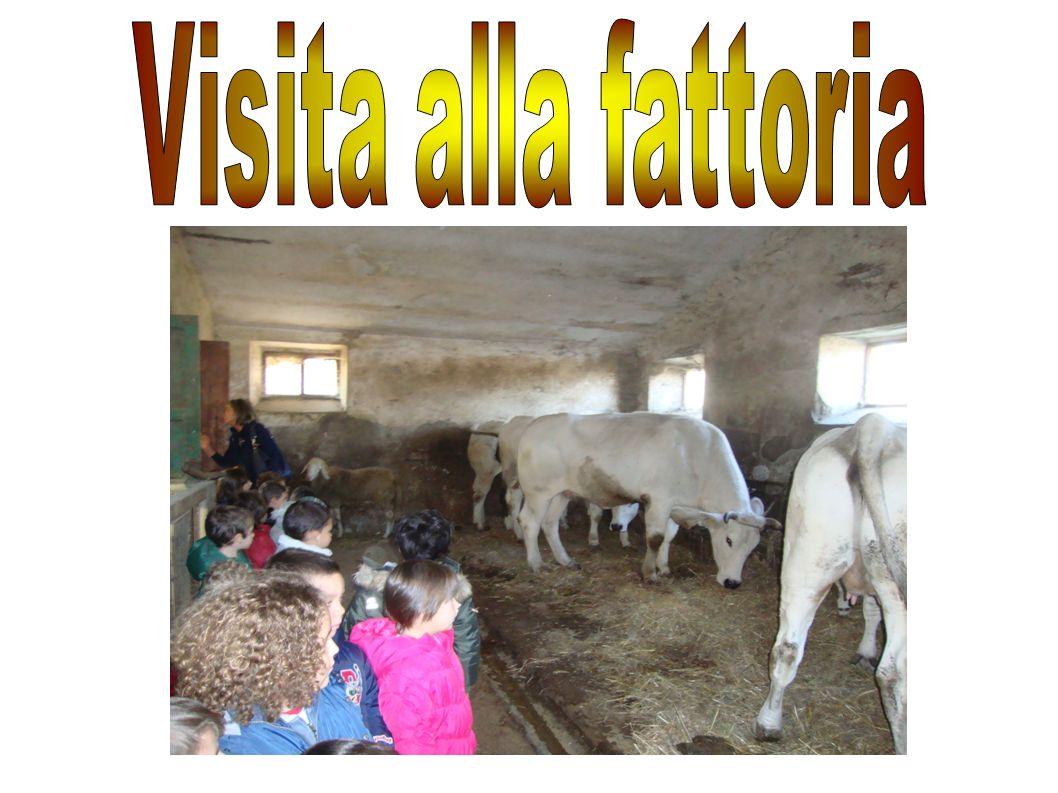 Visita alla fattoria
