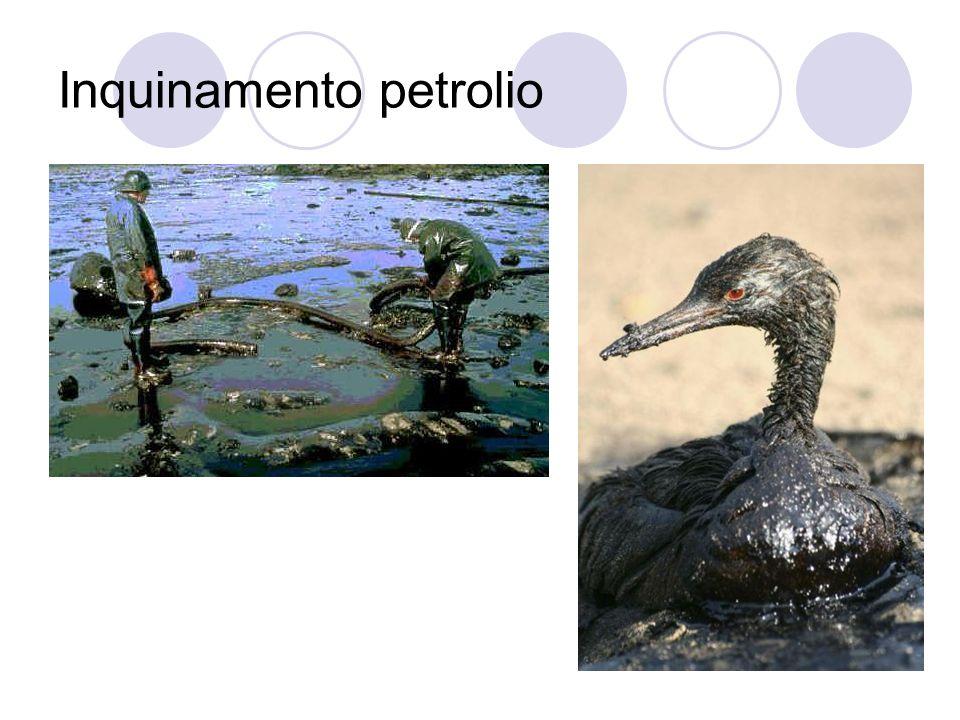 Inquinamento petrolio