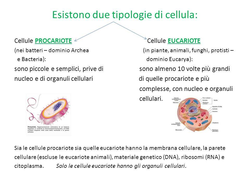 Esistono due tipologie di cellula: