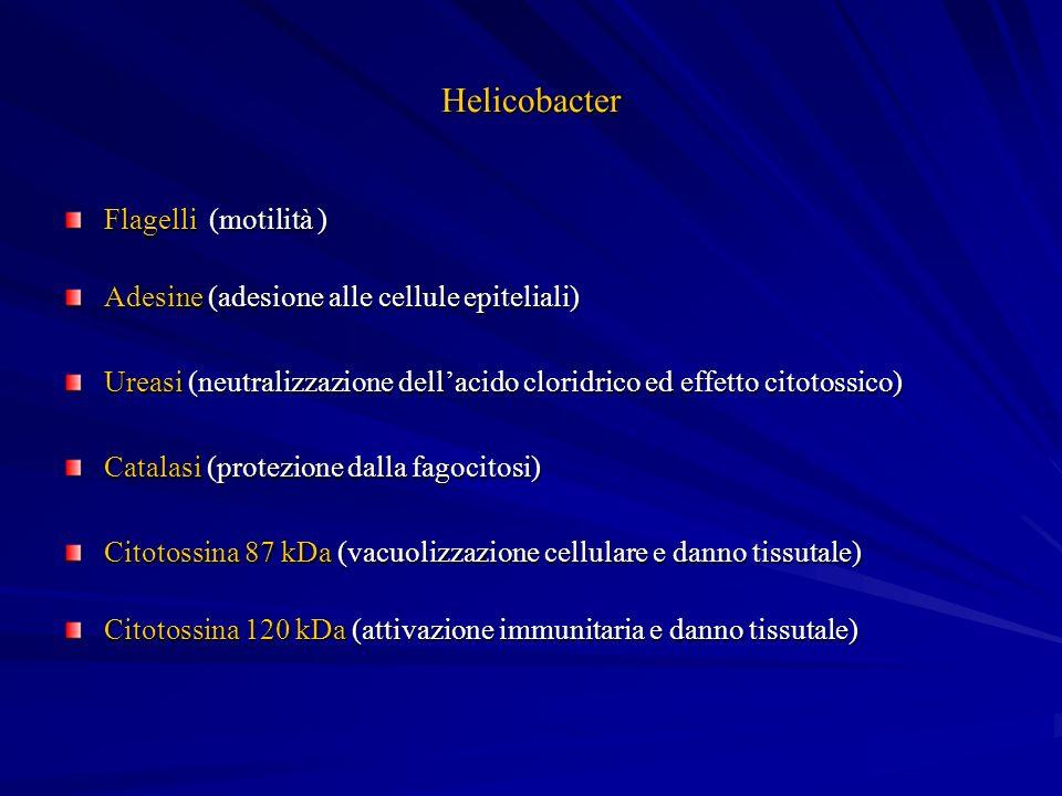 Helicobacter Flagelli (motilità )