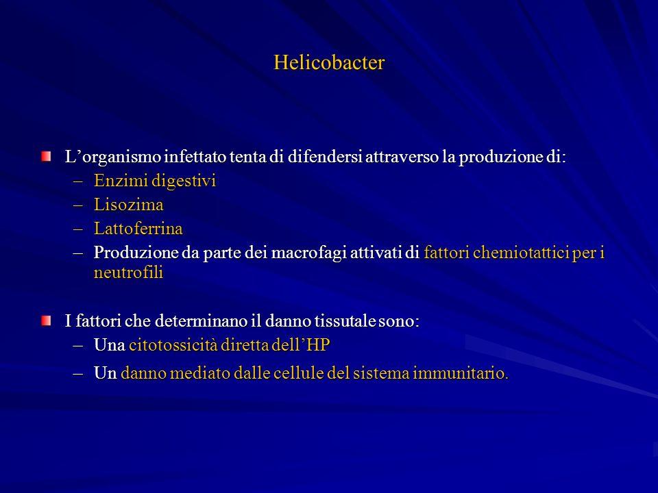 Helicobacter L'organismo infettato tenta di difendersi attraverso la produzione di: Enzimi digestivi.