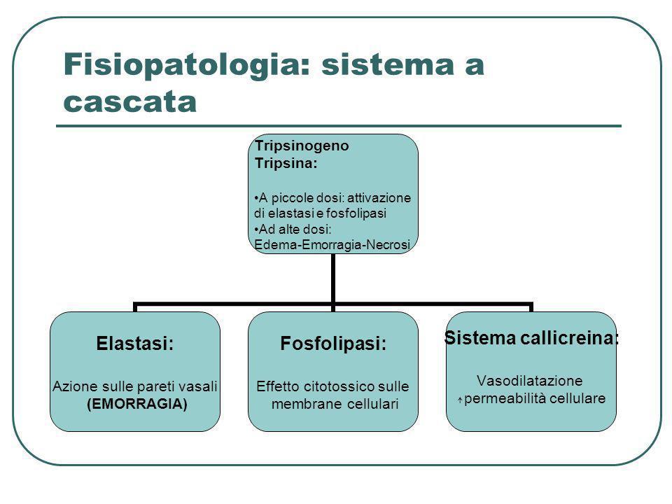 Fisiopatologia: sistema a cascata