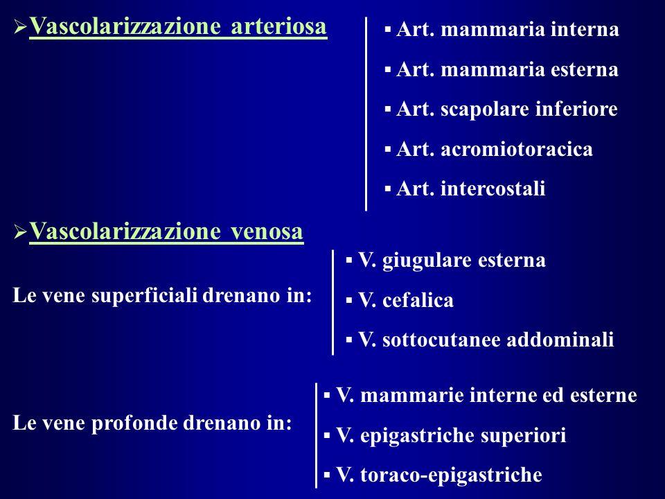 Vascolarizzazione arteriosa