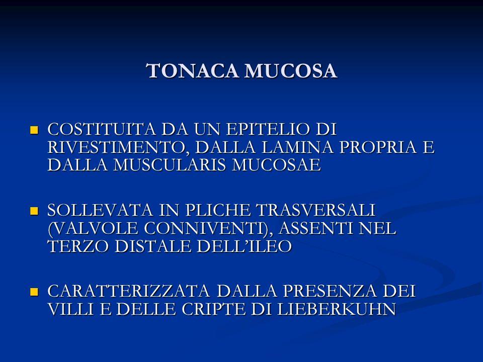 TONACA MUCOSA COSTITUITA DA UN EPITELIO DI RIVESTIMENTO, DALLA LAMINA PROPRIA E DALLA MUSCULARIS MUCOSAE.