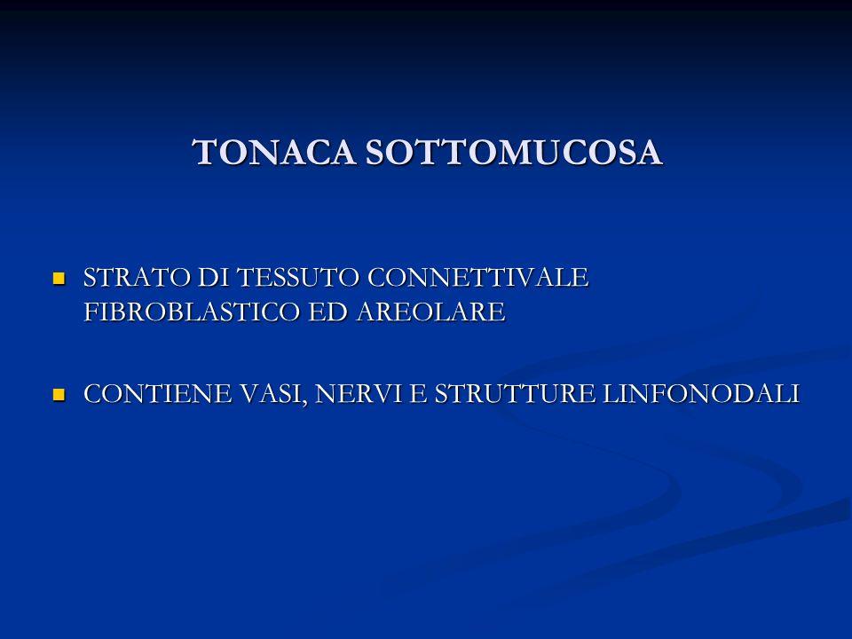 TONACA SOTTOMUCOSA STRATO DI TESSUTO CONNETTIVALE FIBROBLASTICO ED AREOLARE.