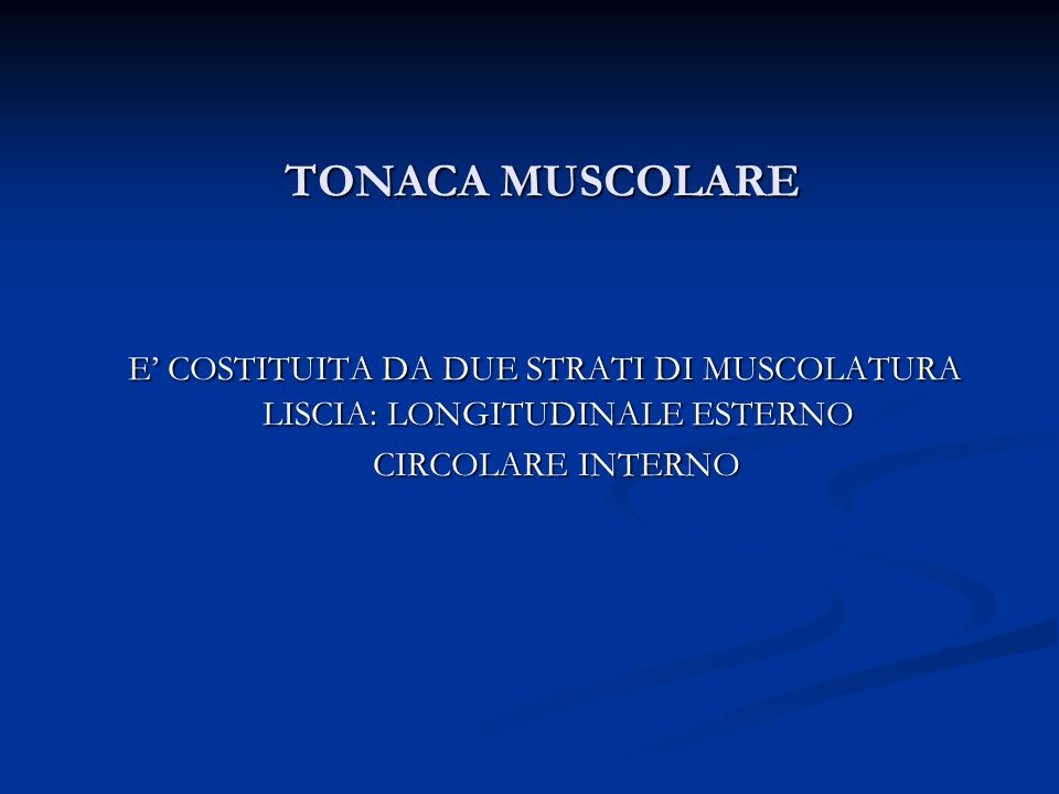 TONACA MUSCOLARE E' COSTITUITA DA DUE STRATI DI MUSCOLATURA LISCIA: LONGITUDINALE ESTERNO.