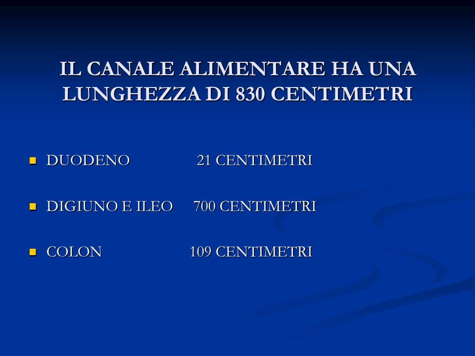 IL CANALE ALIMENTARE HA UNA LUNGHEZZA DI 830 CENTIMETRI