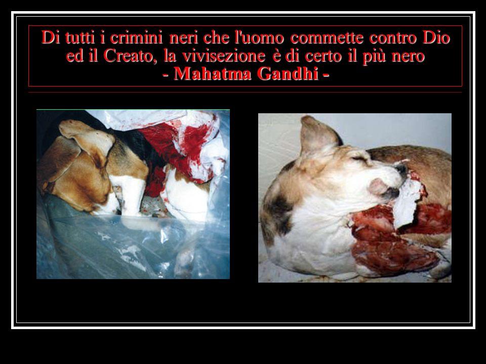 Di tutti i crimini neri che l uomo commette contro Dio ed il Creato, la vivisezione è di certo il più nero - Mahatma Gandhi -
