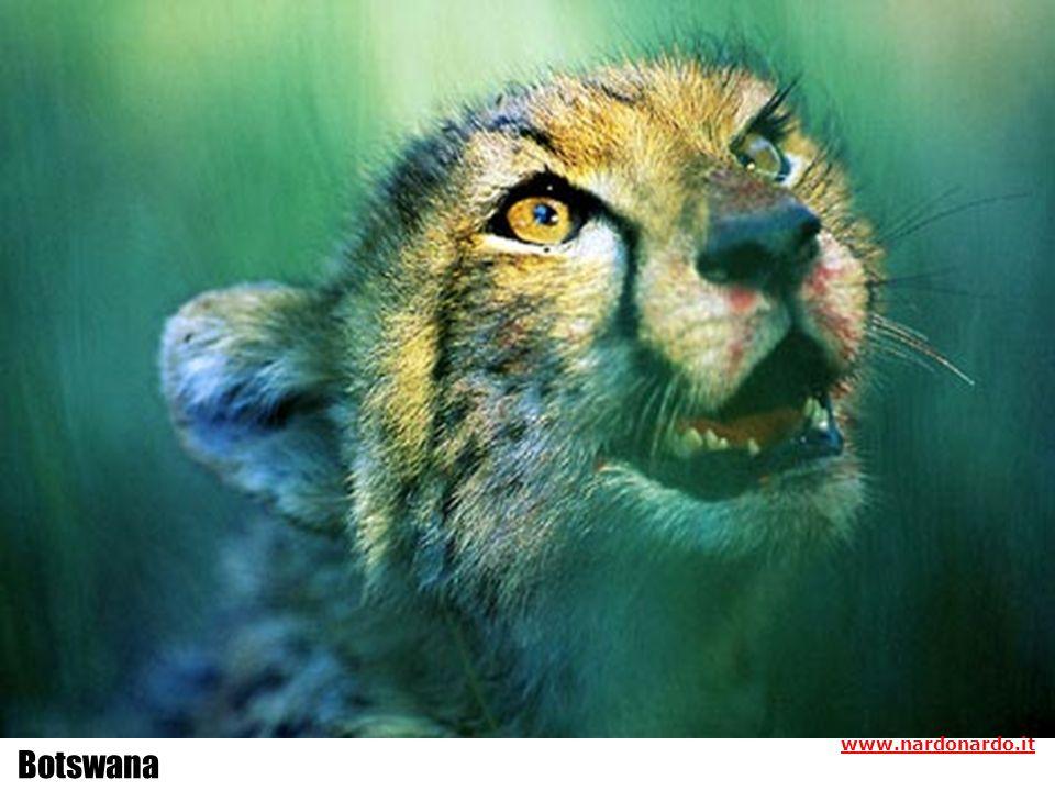 www.nardonardo.it Botswana