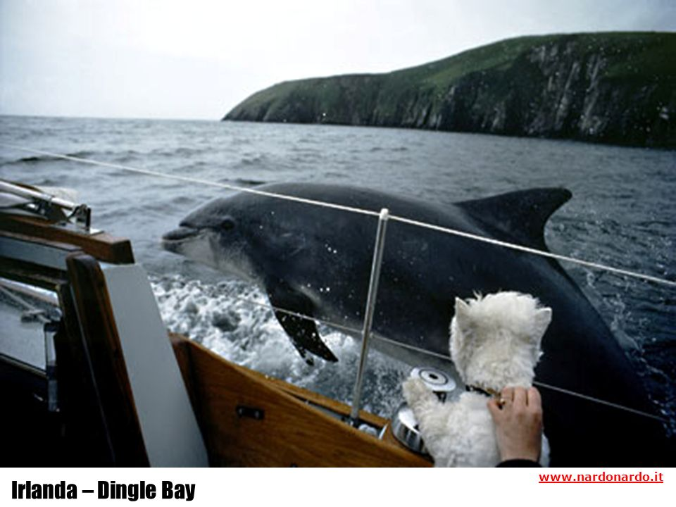 www.nardonardo.it Irlanda – Dingle Bay