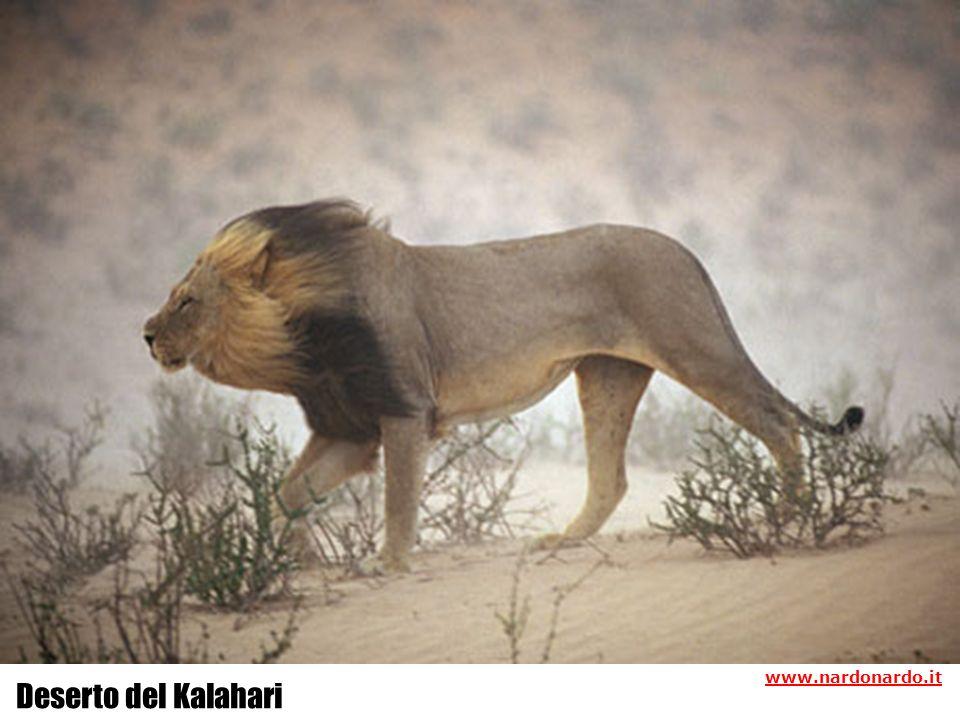 www.nardonardo.it Deserto del Kalahari