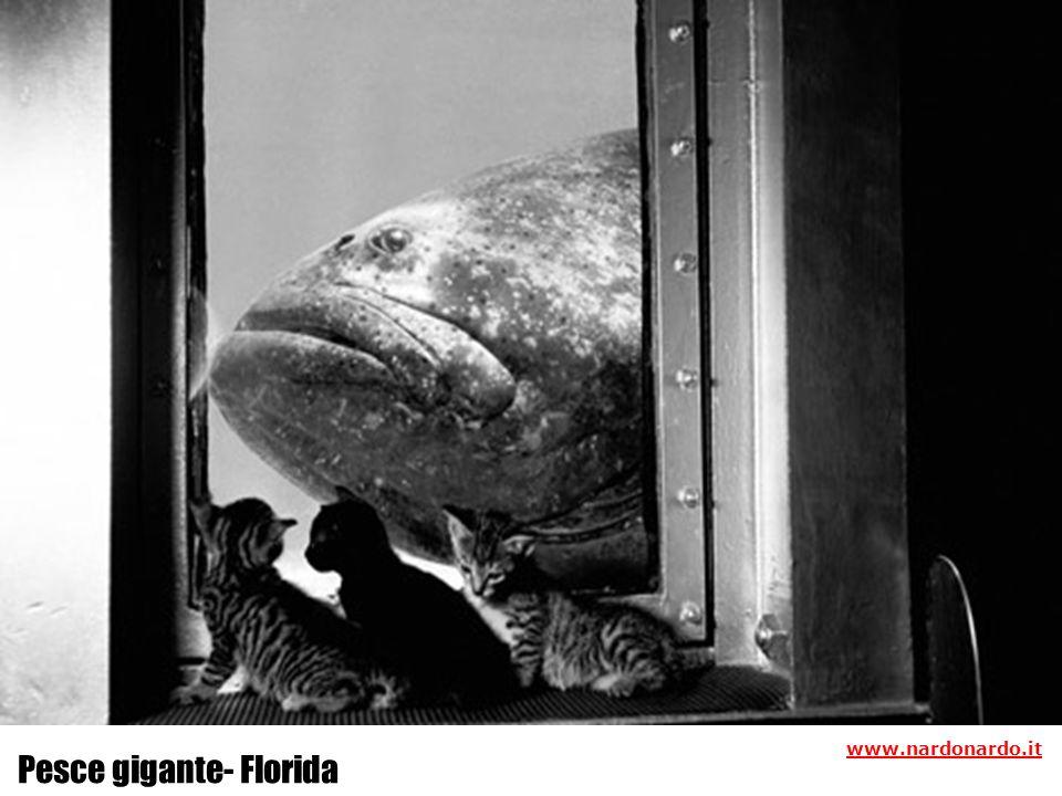 Pesce gigante- Florida