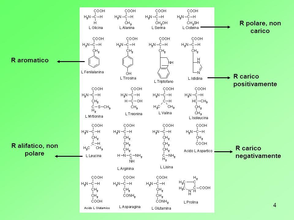 R polare, non caricoR aromatico.R carico positivamente.