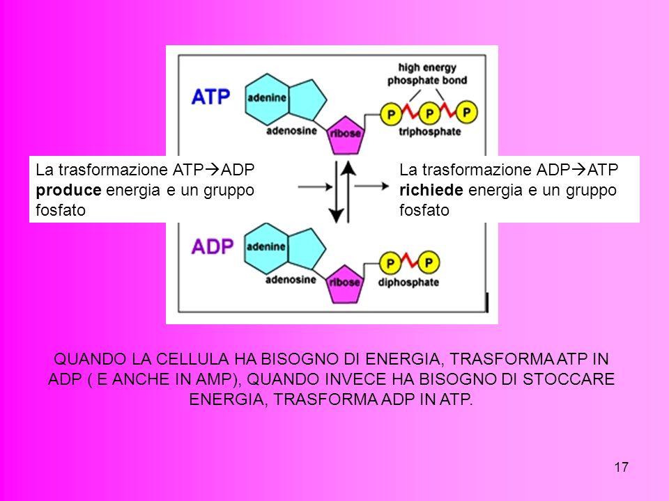 La trasformazione ATPADP produce energia e un gruppo fosfato