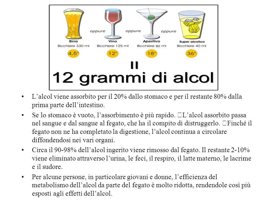 L'alcol viene assorbito per il 20% dallo stomaco e per il restante 80% dalla prima parte dell'intestino.