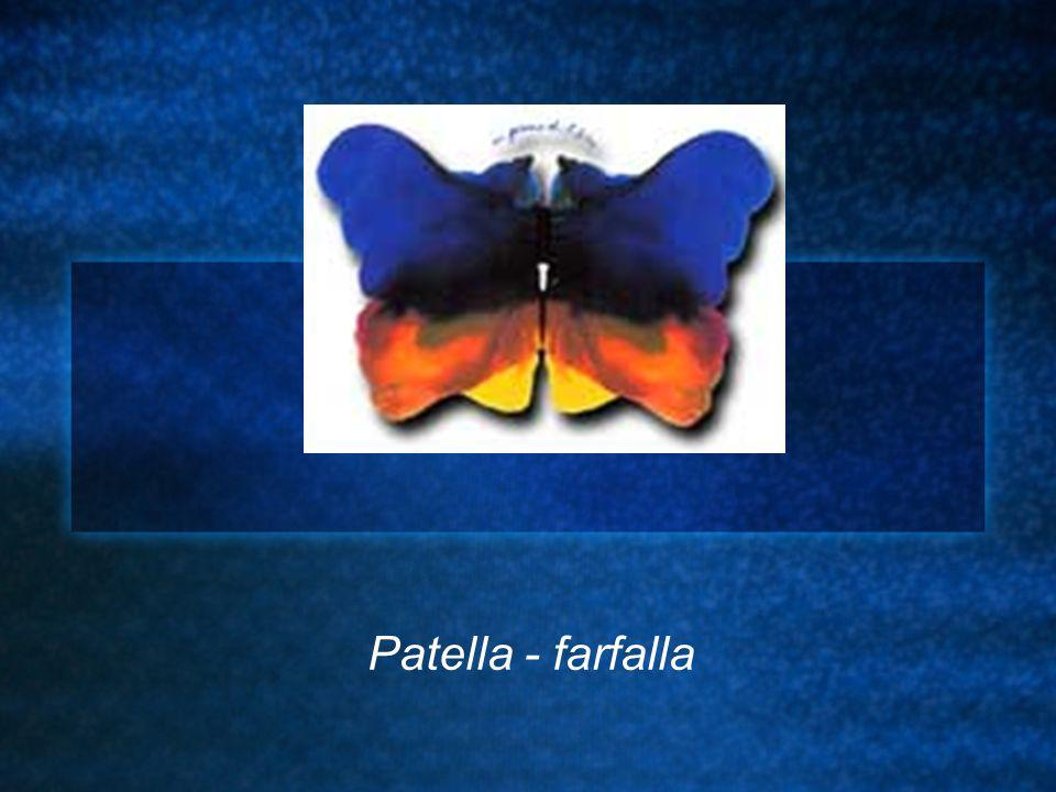 Patella - farfalla