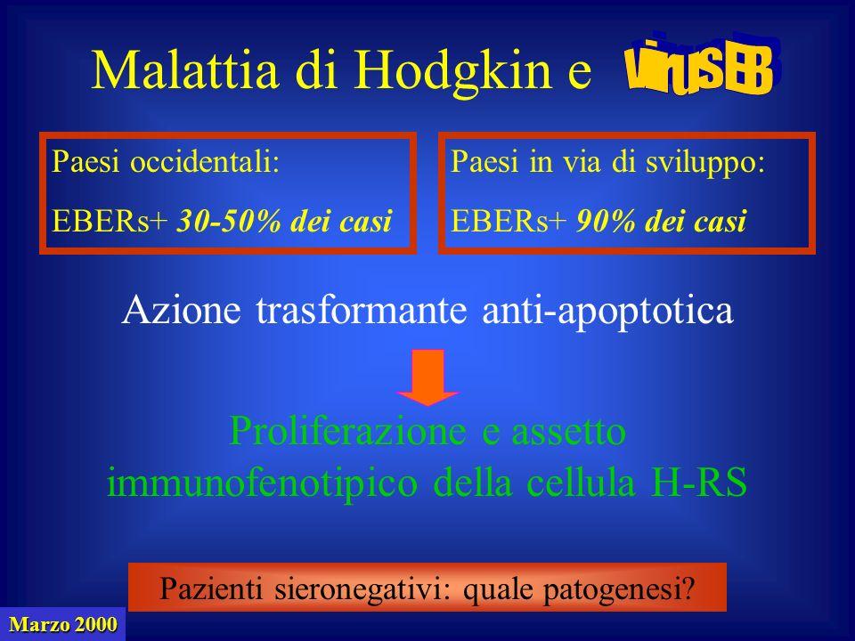 Malattia di Hodgkin e virus EB Azione trasformante anti-apoptotica