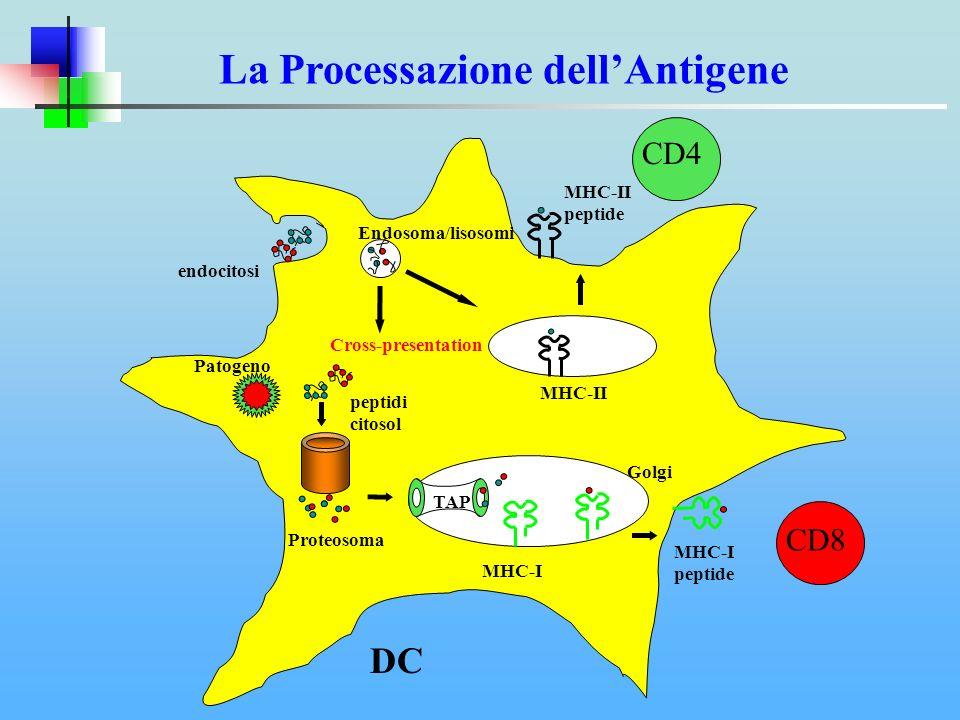 La Processazione dell'Antigene