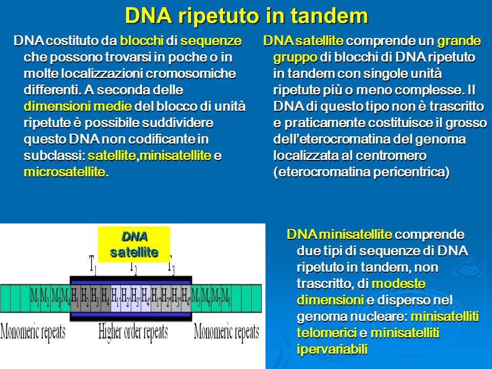 DNA ripetuto in tandem