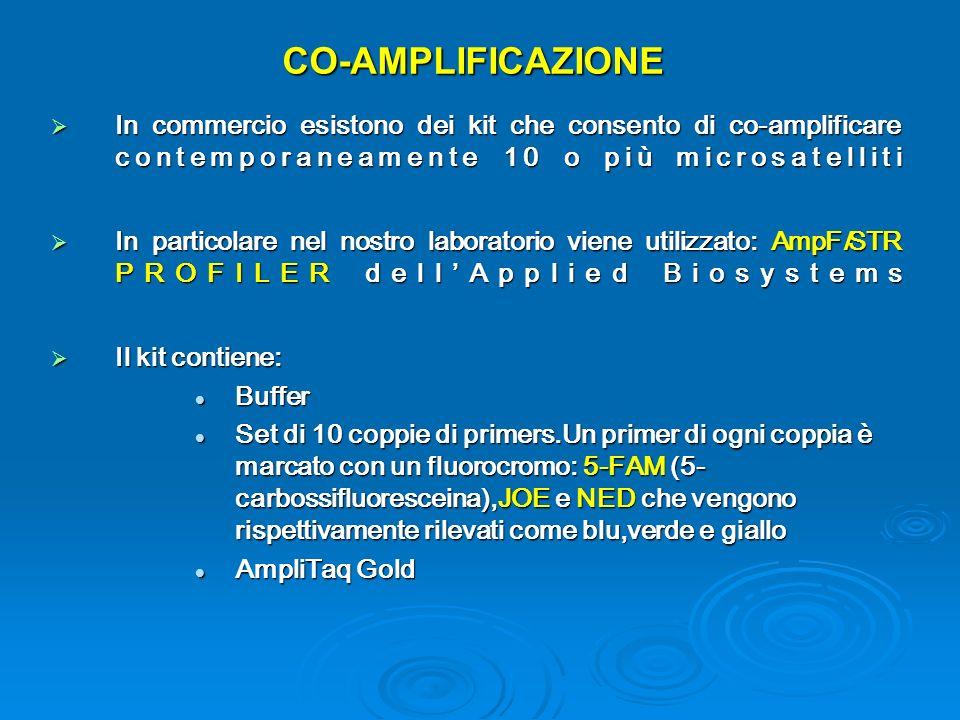 CO-AMPLIFICAZIONE In commercio esistono dei kit che consento di co-amplificare contemporaneamente 10 o più microsatelliti.