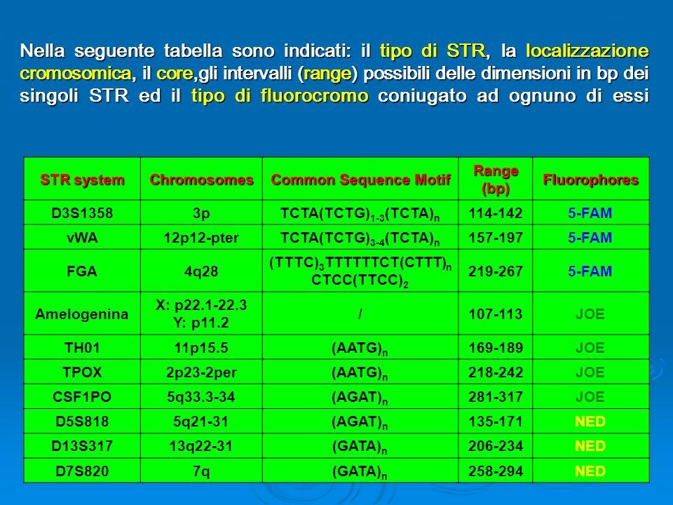 (TTTC)3TTTTTTCT(CTTT)nCTCC(TTCC)2
