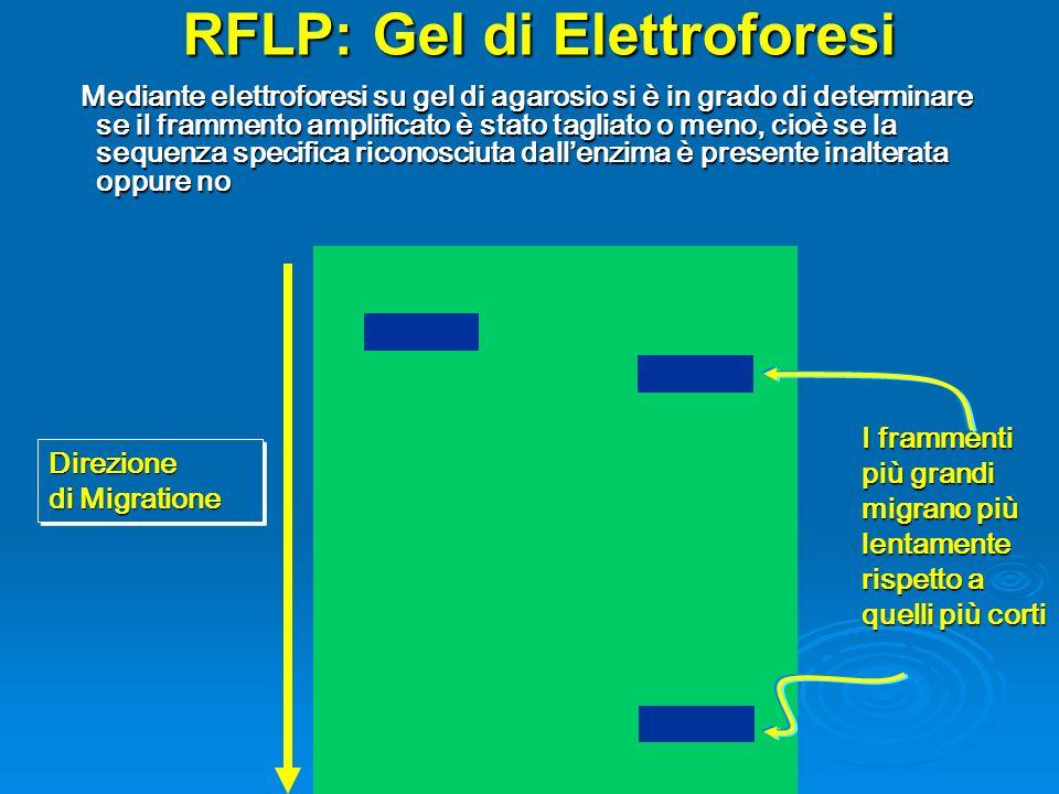 RFLP: Gel di Elettroforesi