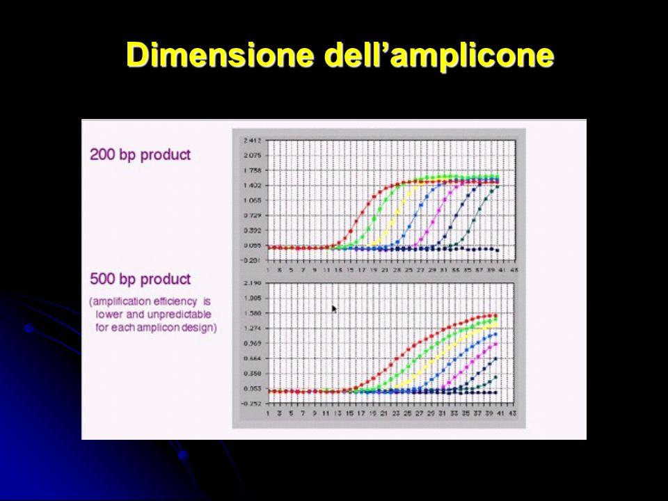 Dimensione dell'amplicone