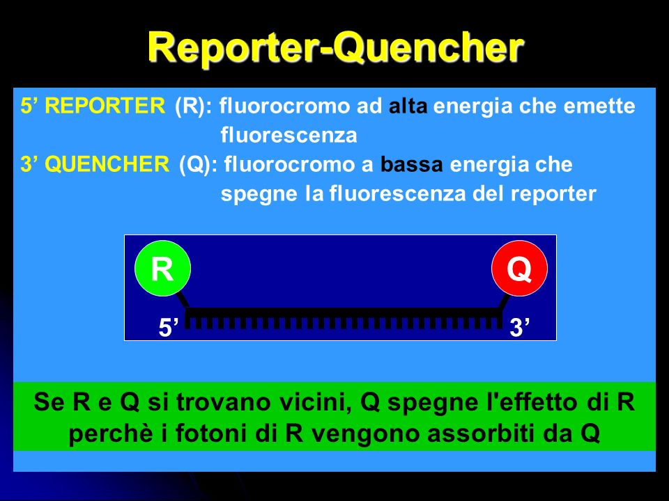 Reporter-Quencher R Q 5' 3'