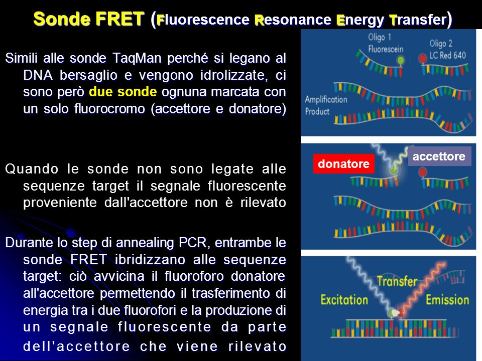 Sonde FRET (Fluorescence Resonance Energy Transfer)