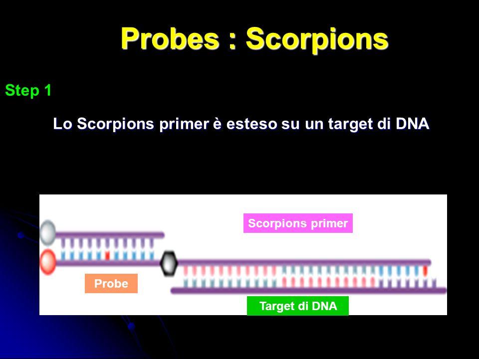 Probes : Scorpions Step 1