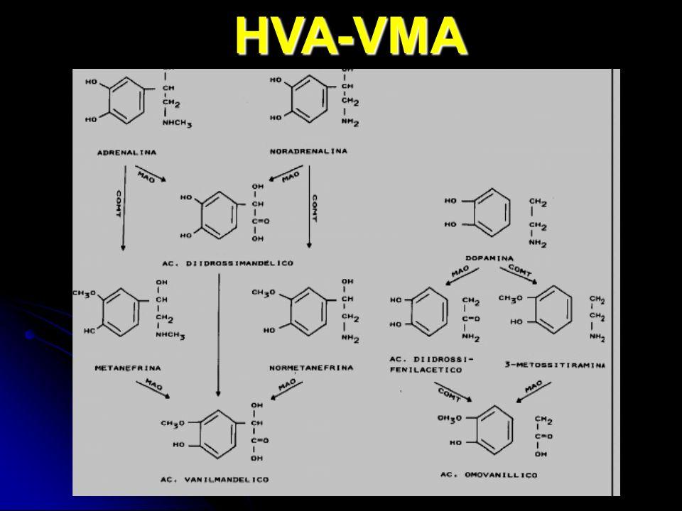HVA-VMA