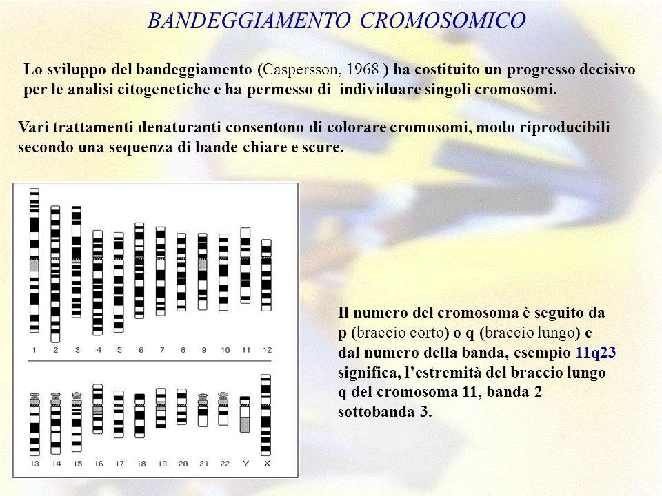 . BANDEGGIAMENTO CROMOSOMICO