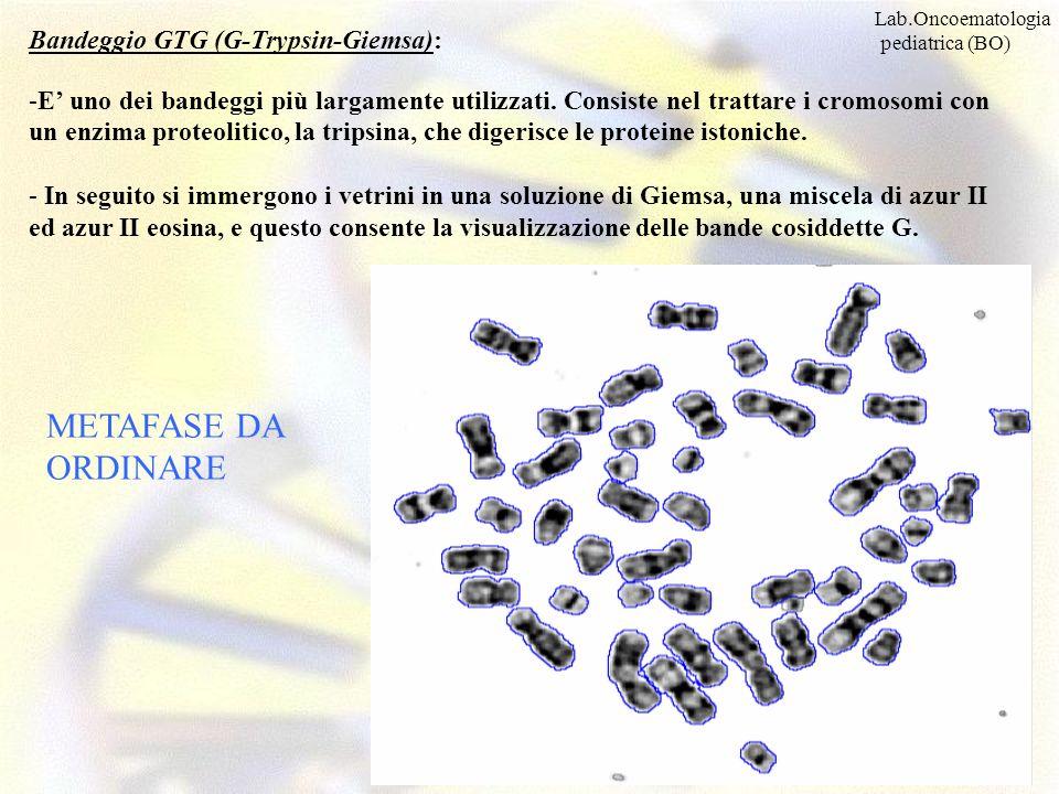 METAFASE DA ORDINARE Bandeggio GTG (G-Trypsin-Giemsa):