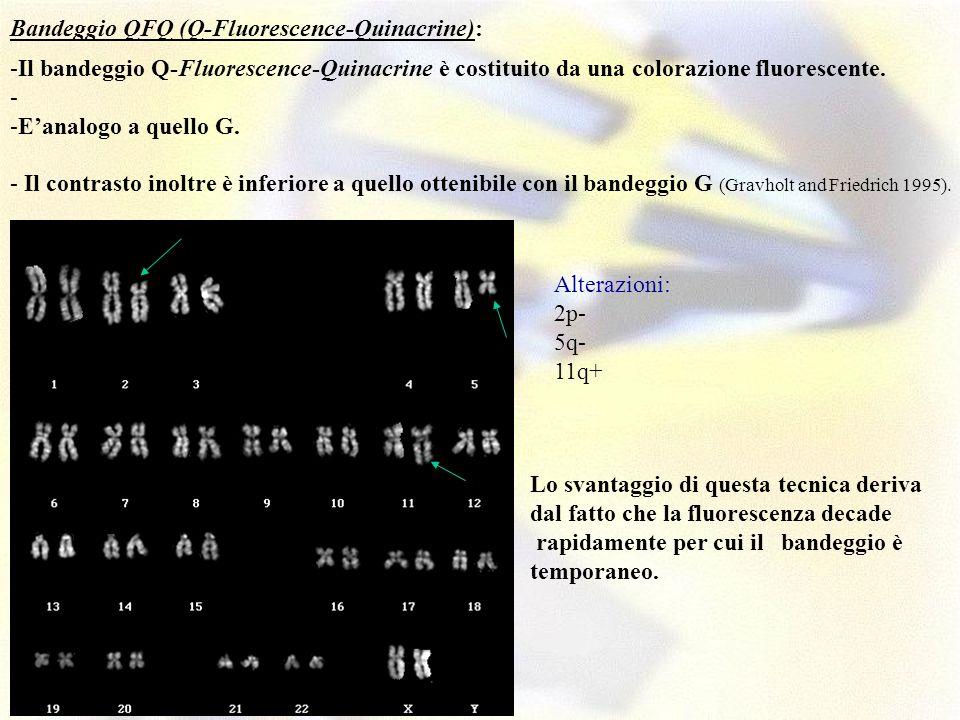 Bandeggio QFQ (Q-Fluorescence-Quinacrine):