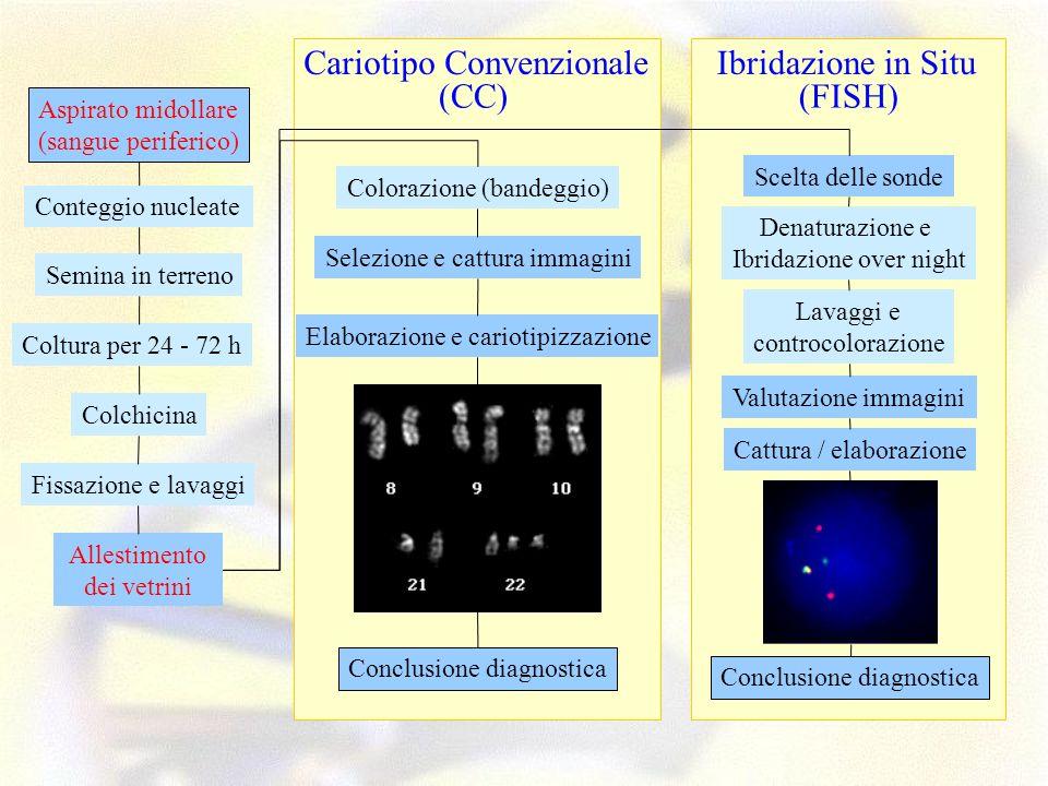 Cariotipo Convenzionale (FISH) Ibridazione in Situ