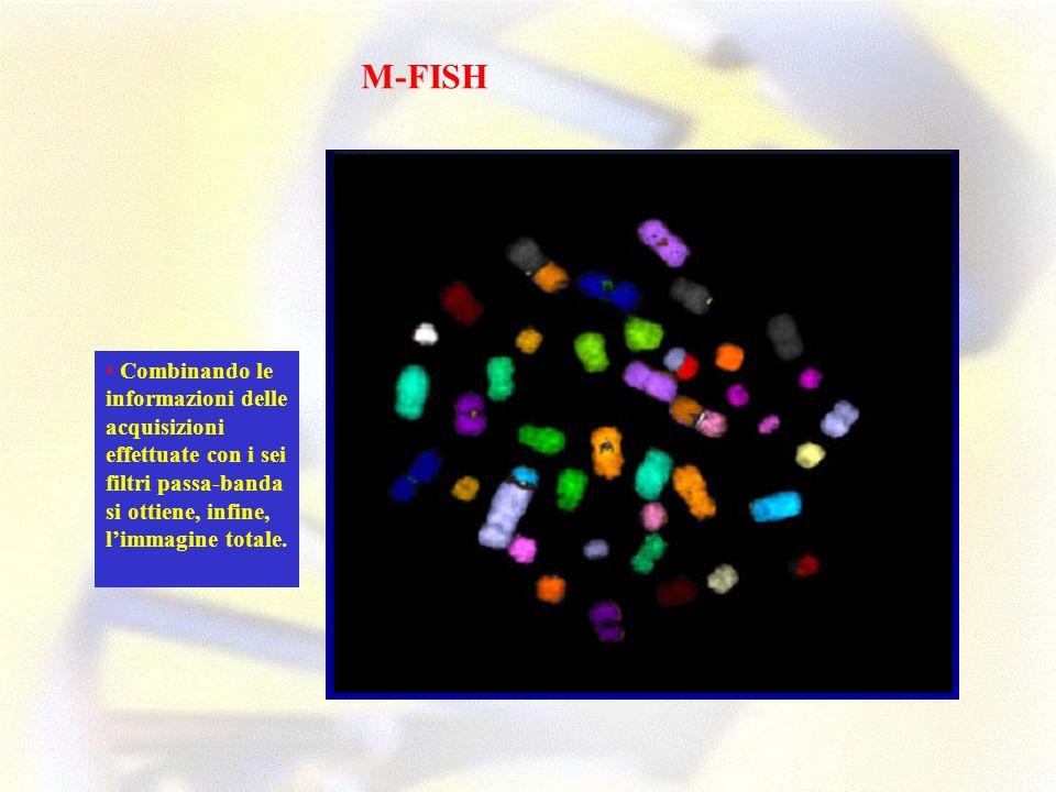 M-FISH • Combinando le informazioni delle acquisizioni