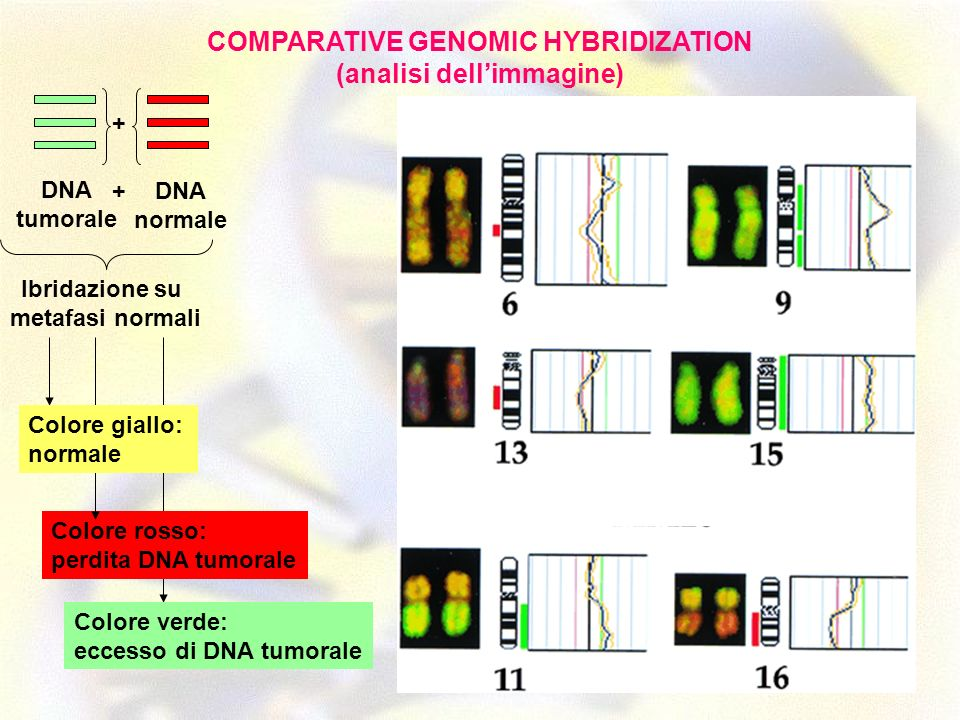 COMPARATIVE GENOMIC HYBRIDIZATION (analisi dell'immagine)