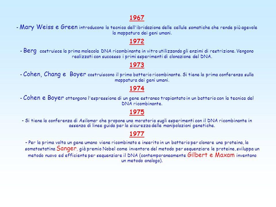 1967 - Mary Weiss e Green introducono la tecnica dell ibridazione delle cellule somatiche che rende più agevole la mappatura dei geni umani.