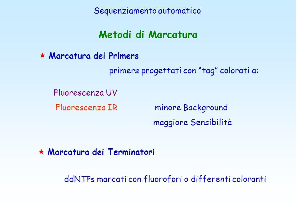 Metodi di Marcatura Sequenziamento automatico Marcatura dei Primers
