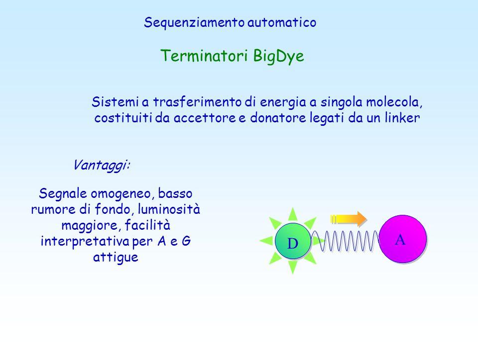 Terminatori BigDye A D Sequenziamento automatico