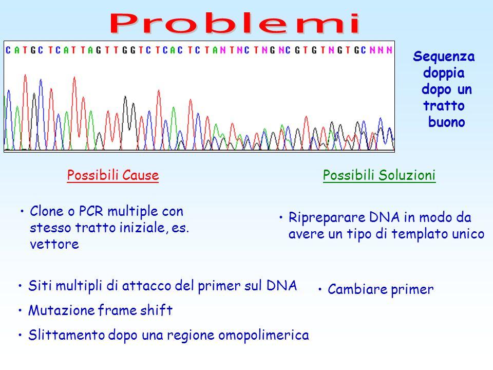 Siti multipli di attacco del primer sul DNA