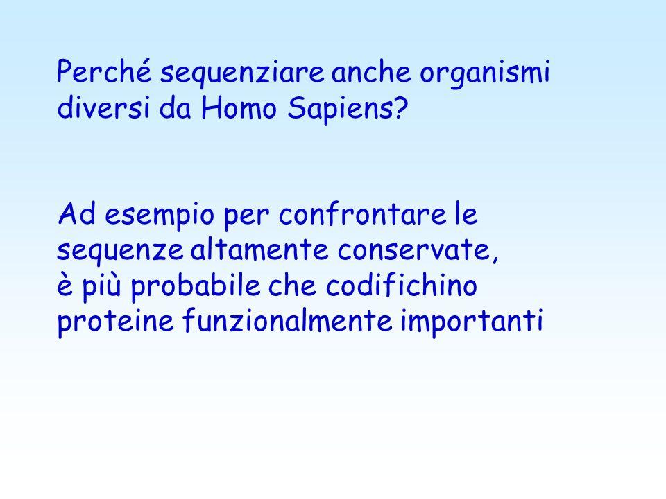 Perché sequenziare anche organismi diversi da Homo Sapiens