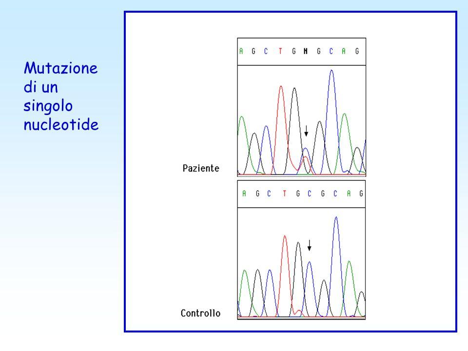 Mutazione di un singolo nucleotide